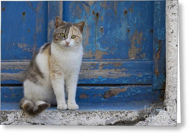 Cat In A Doorway, Greece Greeting Card
