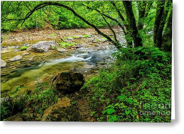 Greeting Card featuring the photograph Williams River Summer by Thomas R Fletcher