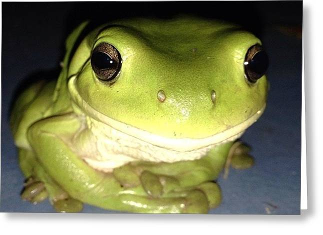 Kermit greeting cards mobile prints kermit the frog greeting card m4hsunfo