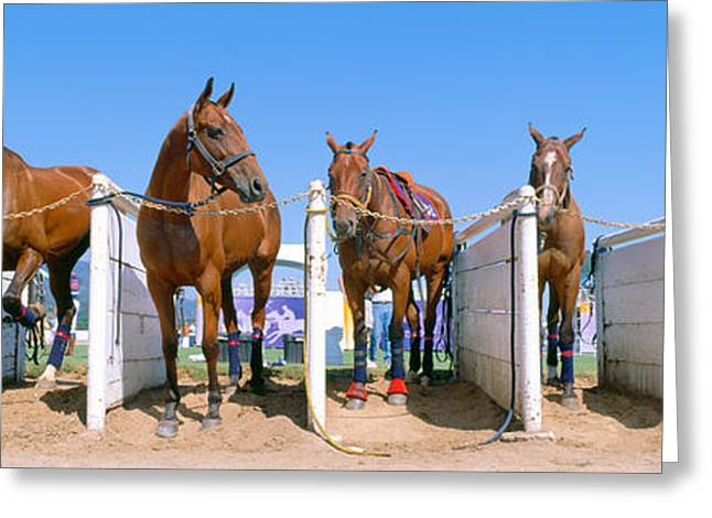 1998 World Polo Championship, Horses Greeting Card by Panoramic Images