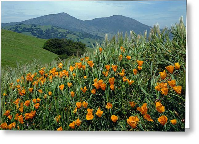 1a6493 Mt. Diablo And Poppies Greeting Card