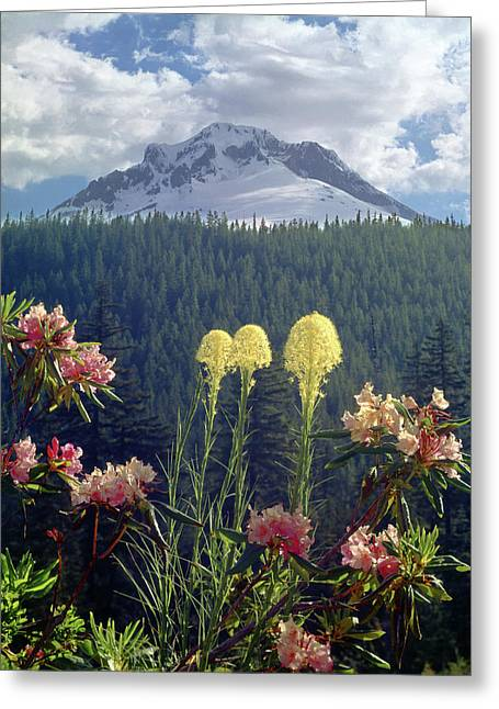 1m5101 Flowers And Mt. Hood Greeting Card