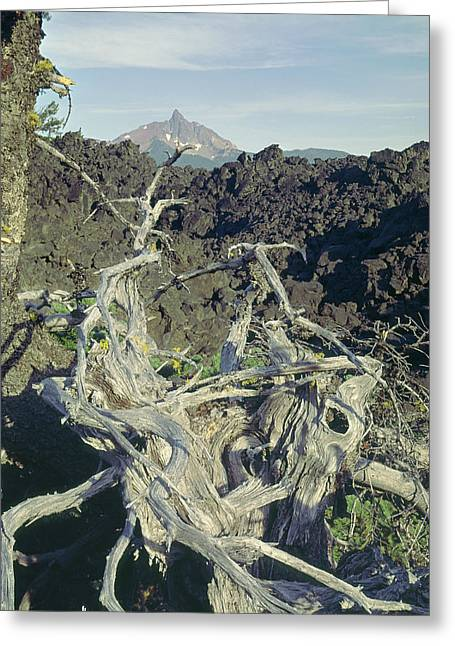 Greeting Card featuring the photograph 1m5412 Mt. Washington Over Lava Fields Wa by Ed Cooper Photography