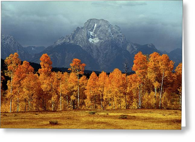 1m9235 Mt. Moran In Autumn Greeting Card