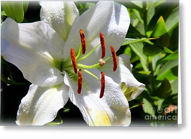 1st Lilly Greeting Card by Kip Krause