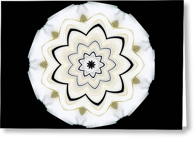 9 Petaled Designs Greeting Card by Baha'i Writings As Art