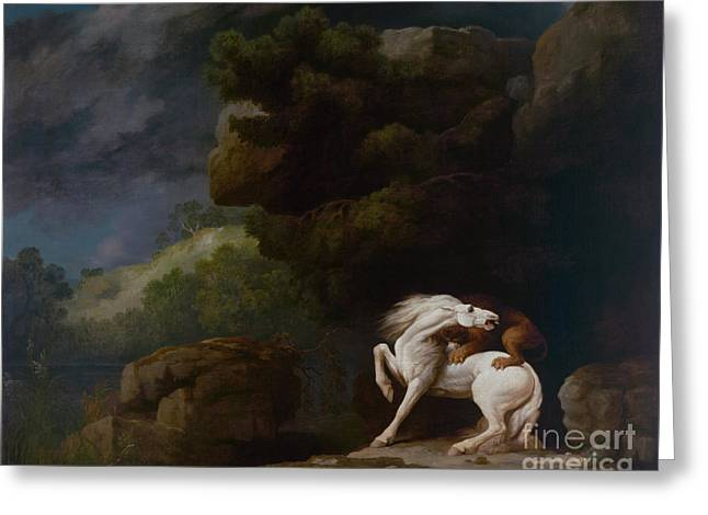 A Lion Attacking A Horse Greeting Card by Celestial Images