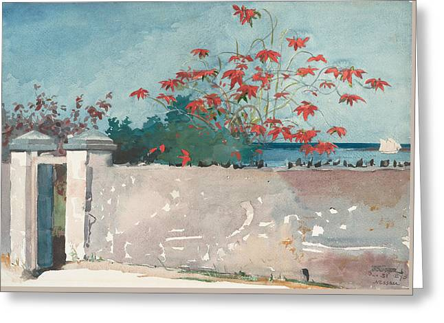 A Wall, Nassau Greeting Card by Winslow Homer