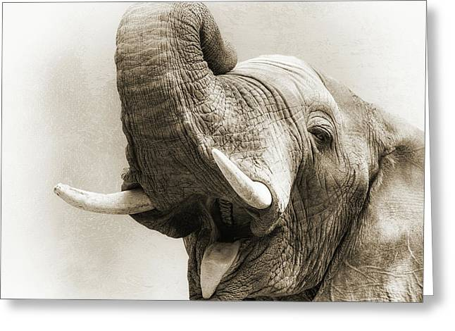 African Elephant Closeup Square Greeting Card