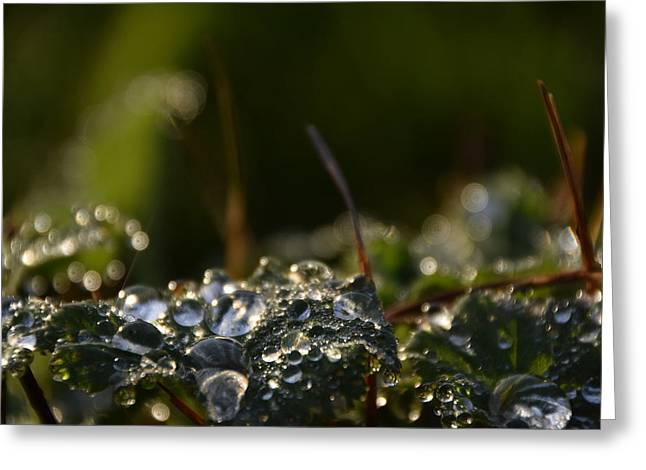 After Rain Greeting Card by Eye Contact