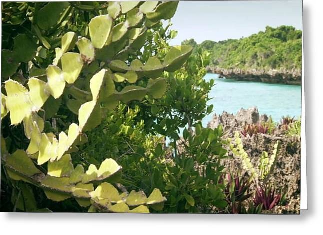 Amazing Coral Reef Vegitation Plants That Can Live During High Tides As Well As Prolonged Low Time S Greeting Card