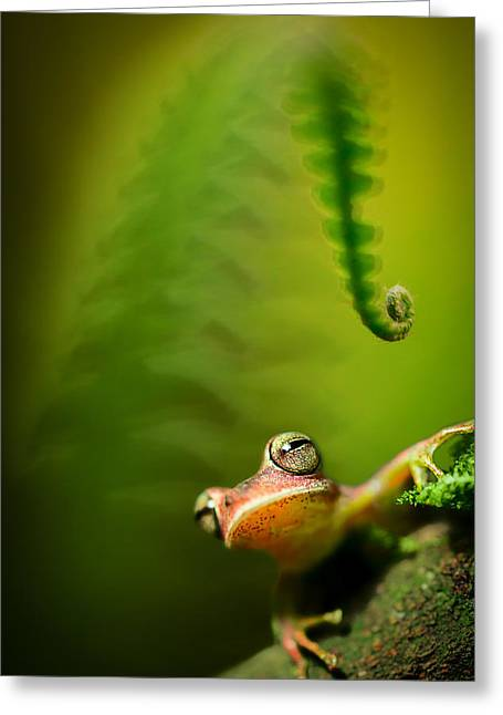 Amazon Tree Frog Greeting Card by Dirk Ercken