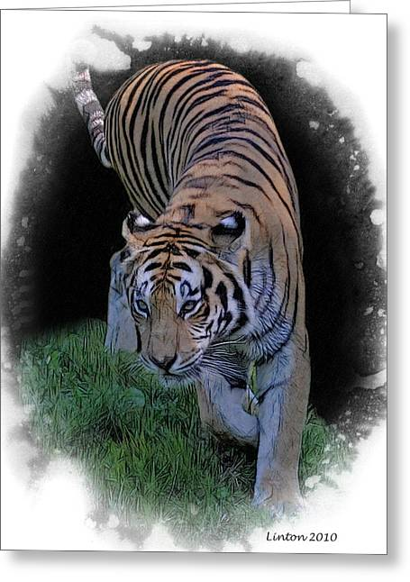Asian Tiger Greeting Card
