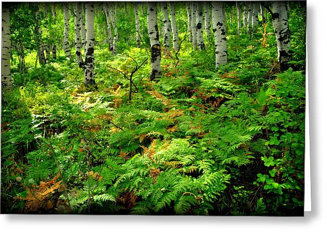 Aspens And Ferns Greeting Card by Nathan Abbott