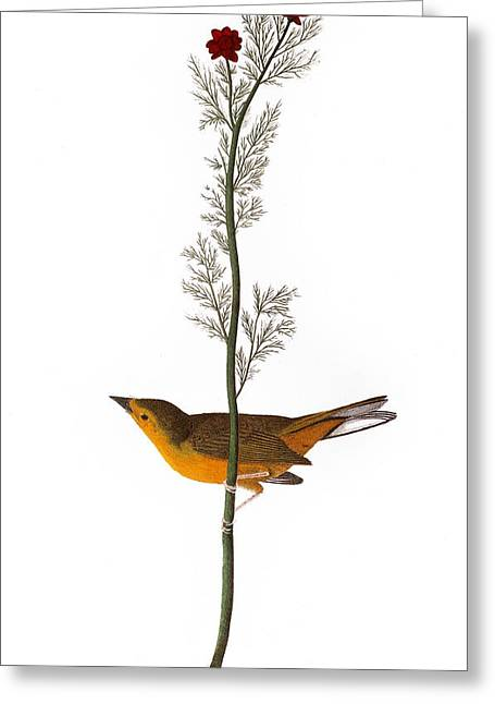 Audubon: Warbler, (1827) Greeting Card by Granger