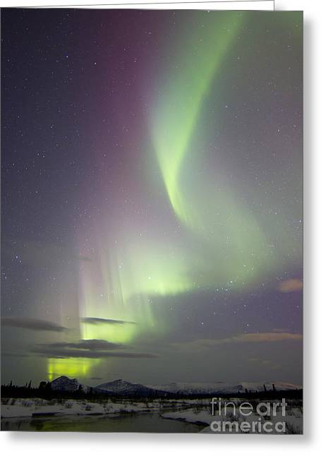 Aurora Borealis Over Creek By Fish Greeting Card by Joseph Bradley