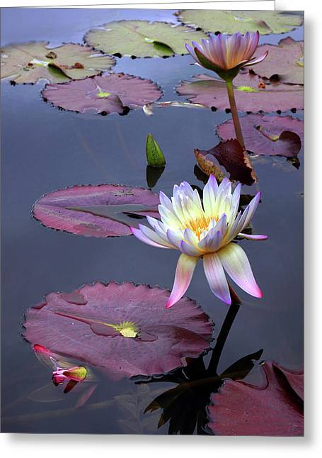 Autumn Lily Greeting Card by Jessica Jenney