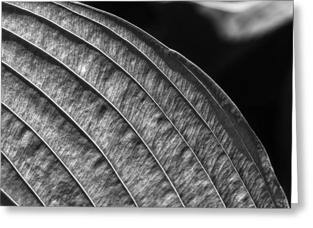 Back Lit Leaf Greeting Card by Robert Ullmann