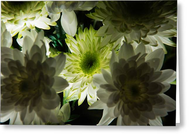 Greeting Card featuring the photograph Backlit White Dahlia by Dennis Dame