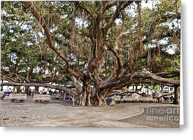 Pellegrin Greeting Cards - Banyan Tree Greeting Card by Scott Pellegrin