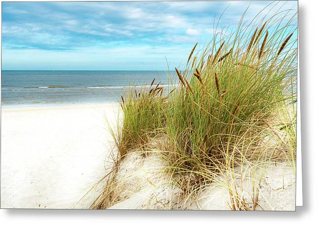 Greeting Card featuring the photograph Beach Grass by Hannes Cmarits