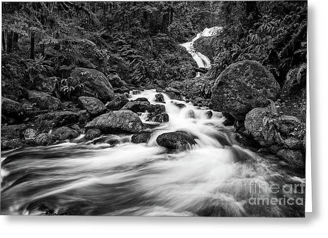 Beautiful Bunch Creek Falls In The Olympic National Park Greeting Card by Jamie Pham