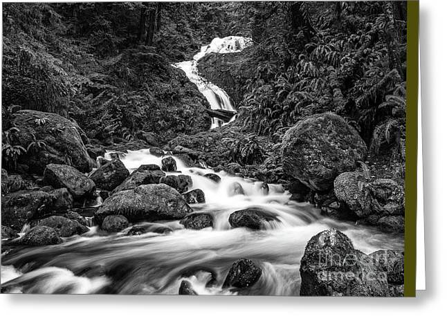 Beautiful Bunch Creek Falls In The Olympic National Park Of Wash Greeting Card