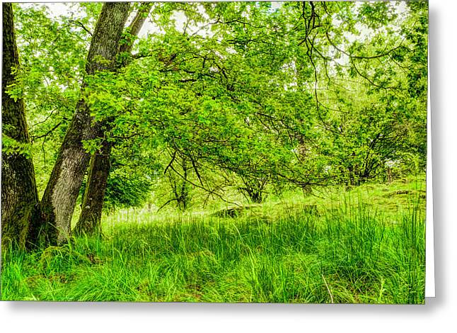 Beautiful Forest  Greeting Card