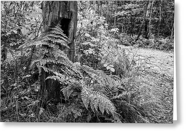 Beautifully Toned Black And White Landscape Of Woodland In Autum Greeting Card