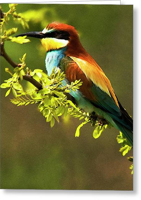 Bee Eater Greeting Card