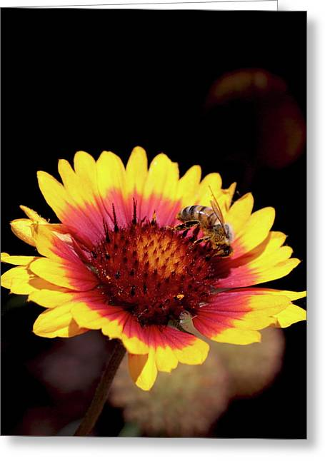 Bee On Flower Greeting Card by Michael Riley