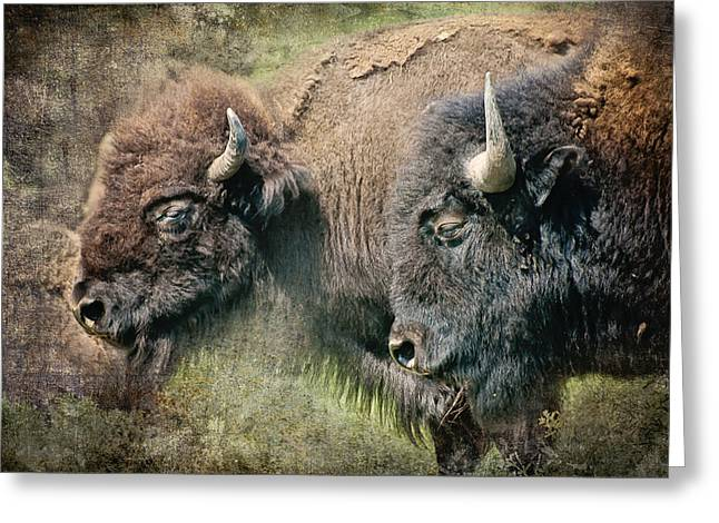 Bisons Greeting Card by Iris Greenwell