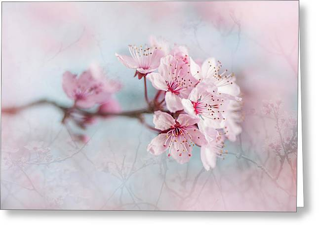 Black Cherry Plum Blossom Greeting Card by Jacky Parker