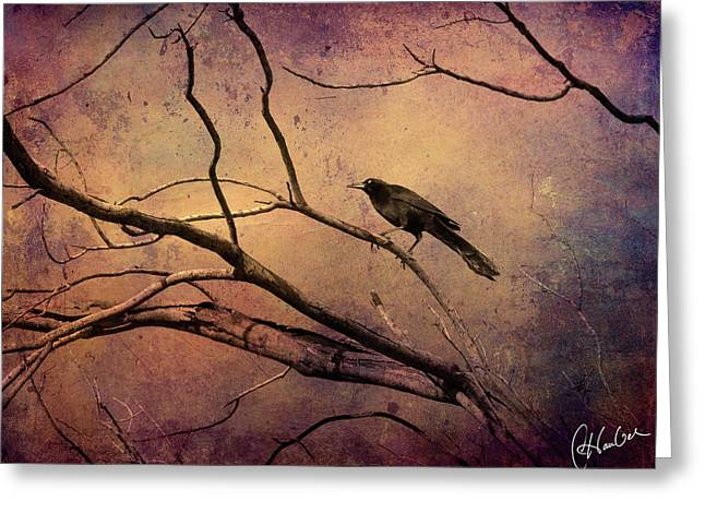 Warm Tones Greeting Cards - Blackbird 3 Greeting Card by Christine Hauber