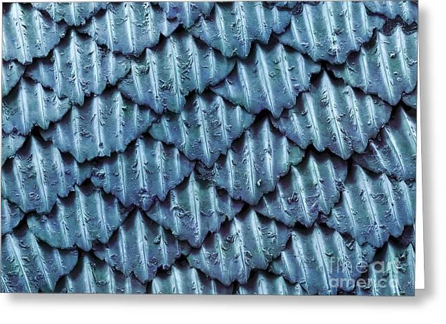 Blacktip Reef Shark Skin, Sem Greeting Card