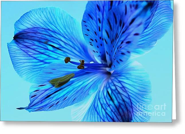 Blue Summer II Greeting Card by Krissy Katsimbras