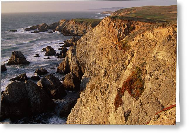 Bodega Head Greeting Card by Soli Deo Gloria Wilderness And Wildlife Photography
