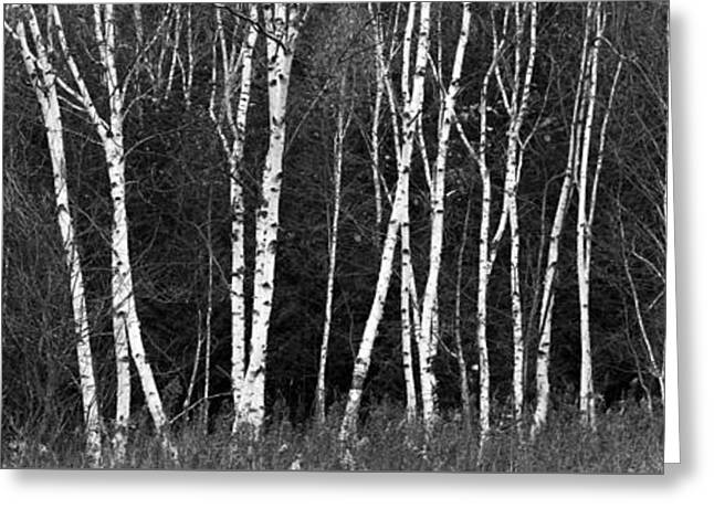 Borches In Black And White Greeting Card