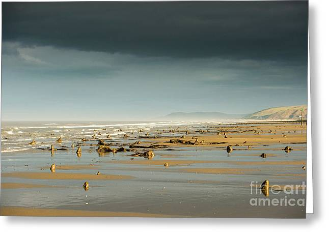 Bronze Age Sunken Forest At Borth On The West Wales Coast Uk Greeting Card