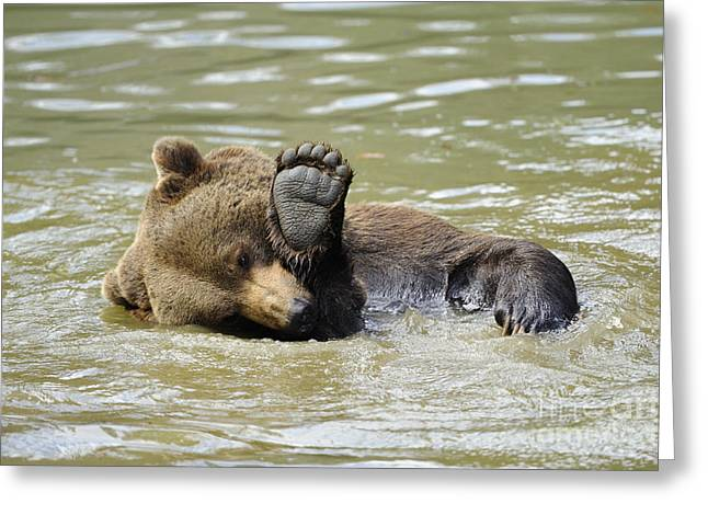 Brown Bear Bathing Greeting Card by David & Micha Sheldon