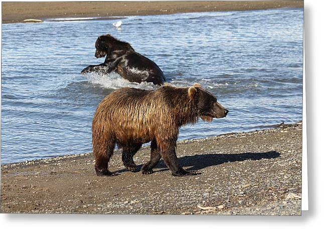 2 Brown Bears Fishing Greeting Card
