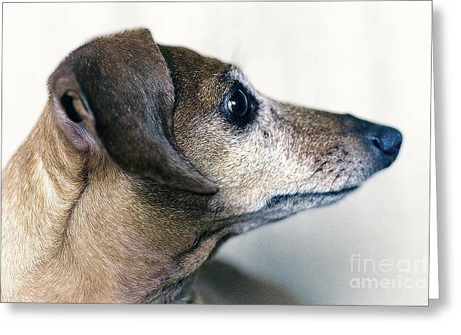 Brownie The Dachshund Greeting Card