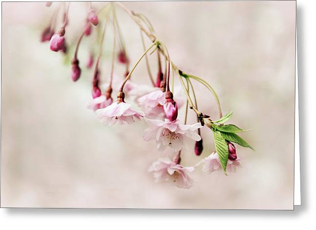 Budding Blossom Greeting Card by Jessica Jenney