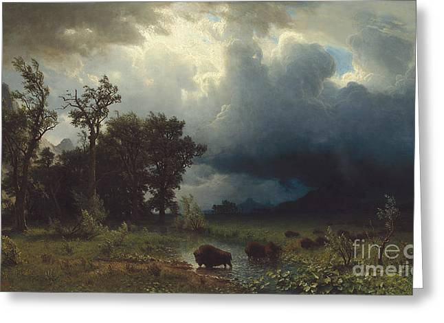 Buffalo Trail  The Impending Storm Greeting Card by Albert Bierstadt