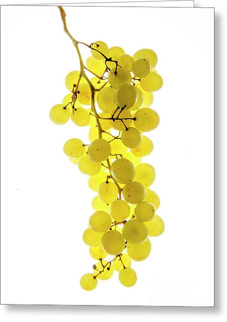Bunch Of White Grapes Greeting Card by Bernard Jaubert