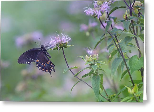 Butterfly Greeting Card by June Marie Sobrito