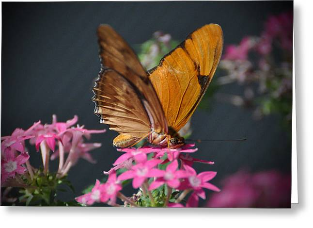Greeting Card featuring the photograph Butterfly by Savannah Gibbs