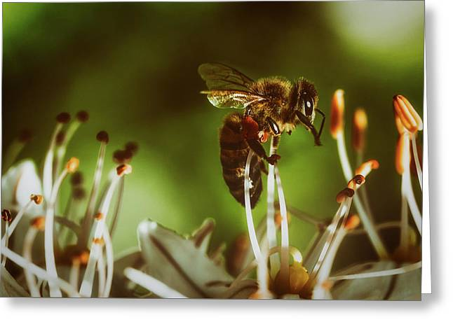 Greeting Card featuring the photograph Bzzz by Michael Siebert