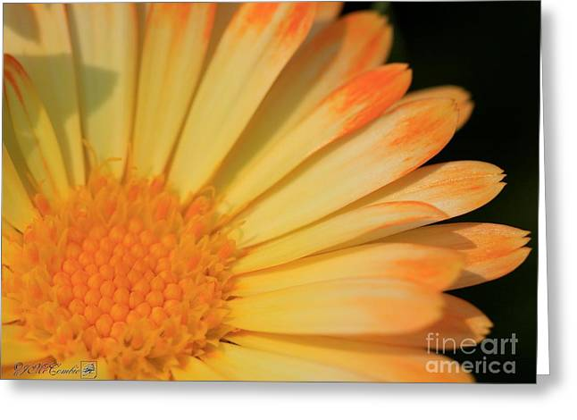 Calendula Named Oopsy Daisy Greeting Card