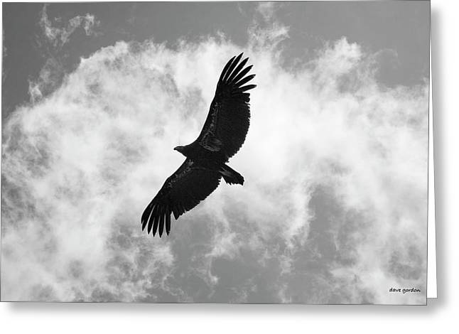 California Condor In Flight Greeting Card by David Gordon